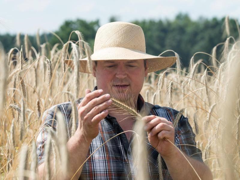 Er sucht sie schrot und korn