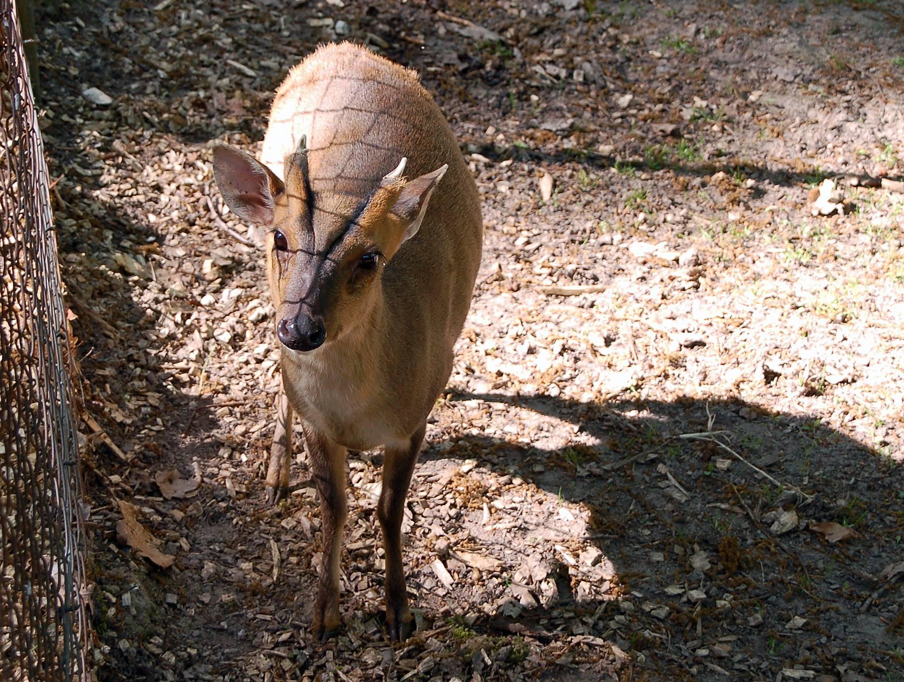 Zoo Tiere Schlachten