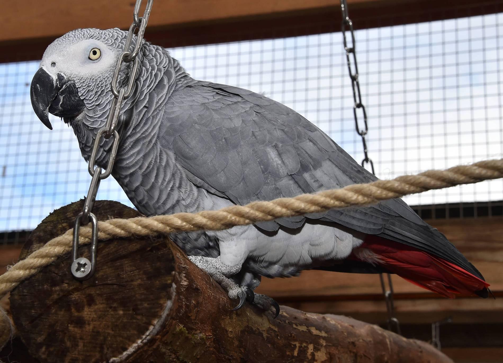 Papagei Bestellt Bei Amazon
