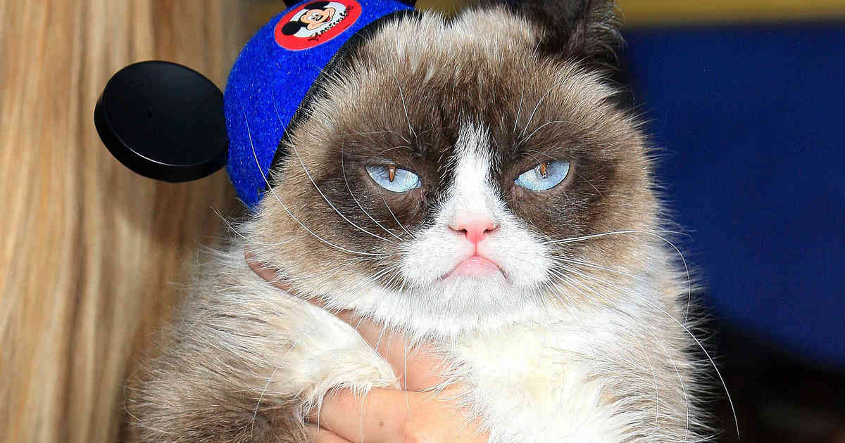 Berühmteste Katze Der Welt