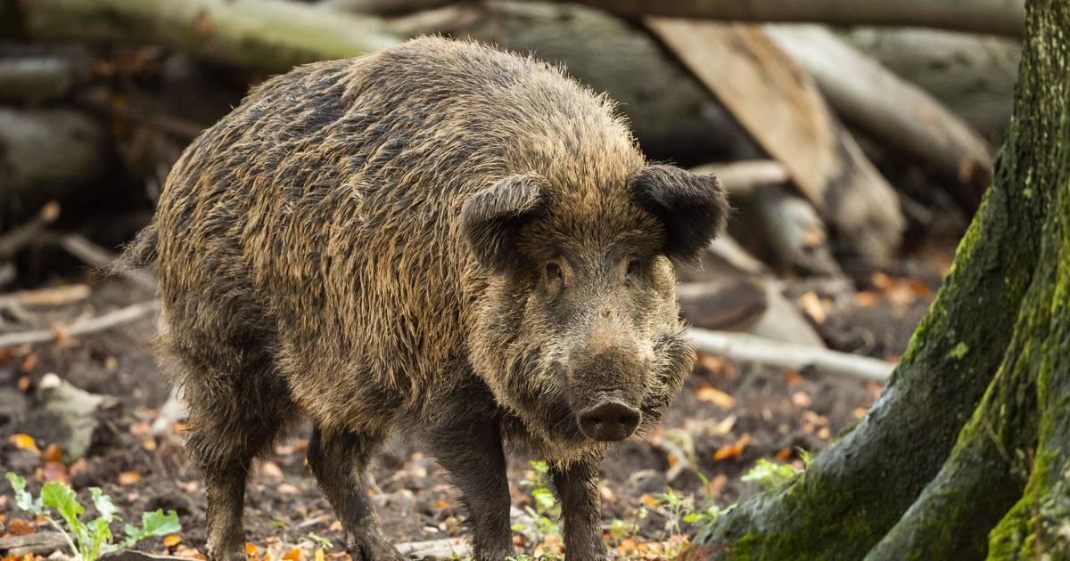 Ermittlungsverfahren im Kreis Ahrweiler: Staatsanwalt ermittelt gegen Wildfleisch-Betrieb
