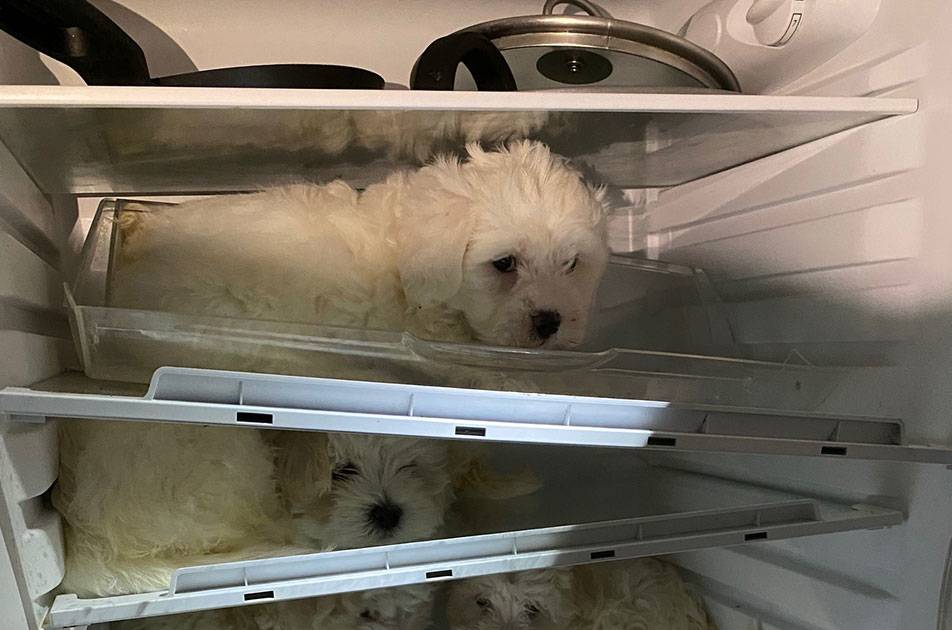 Environmental and Consumer Protection Office: Cologne police rescues puppies from fridge